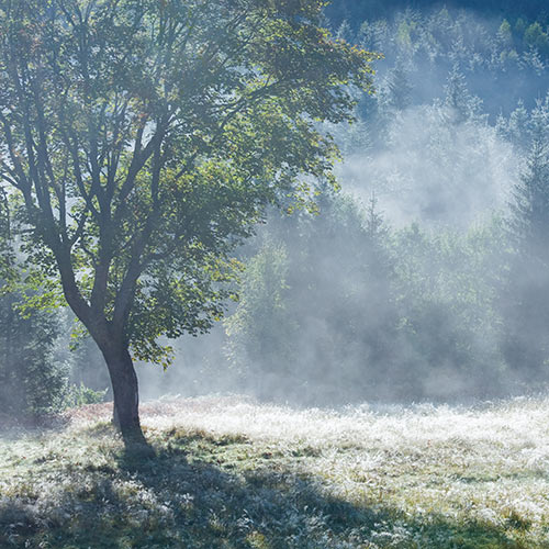 Autumn answer: FOGGY