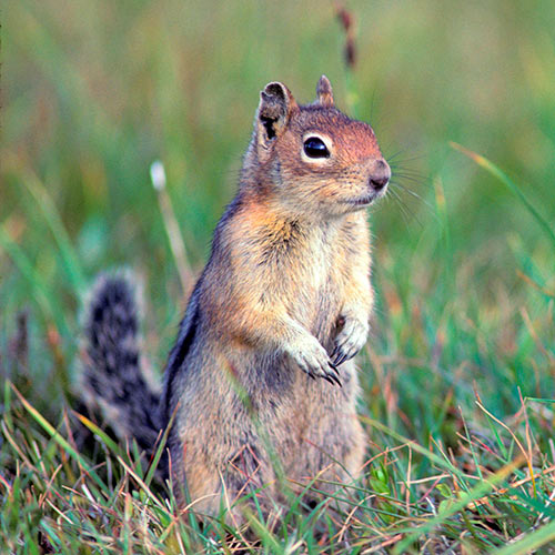 Autumn answer: SQUIRREL