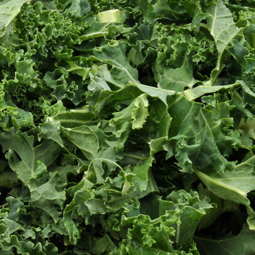 K is for... answer: KALE