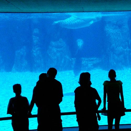Urlaub answer: AQUARIUM