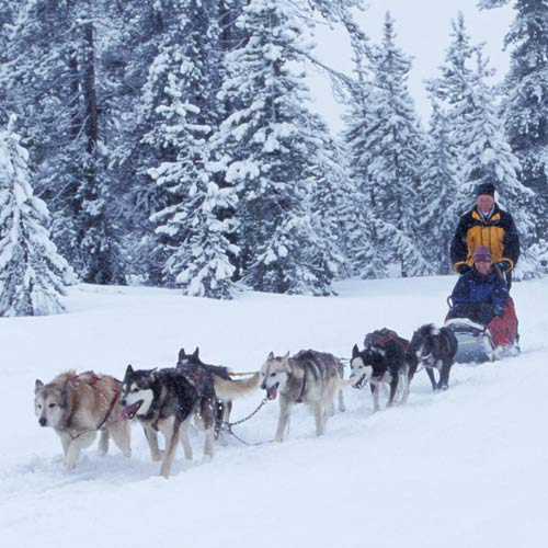 Wunschliste answer: HUSKY SLEDDING