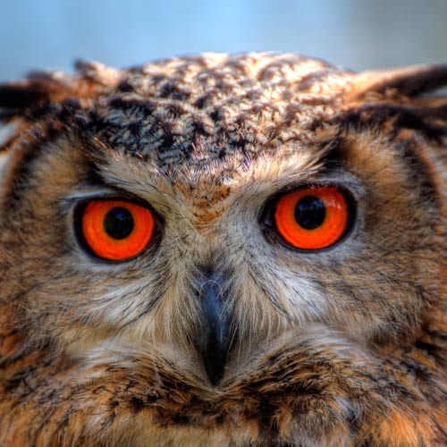 3 Letter words answer: OWL