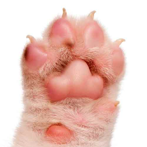 3 Letter words answer: PAW