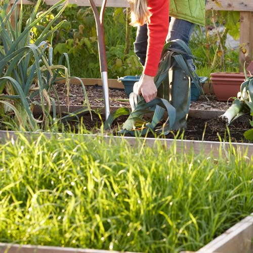 A is for... answer: ALLOTMENT