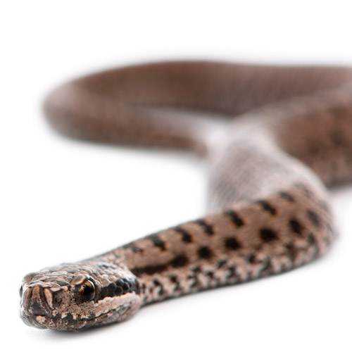 A is for... answer: ADDER