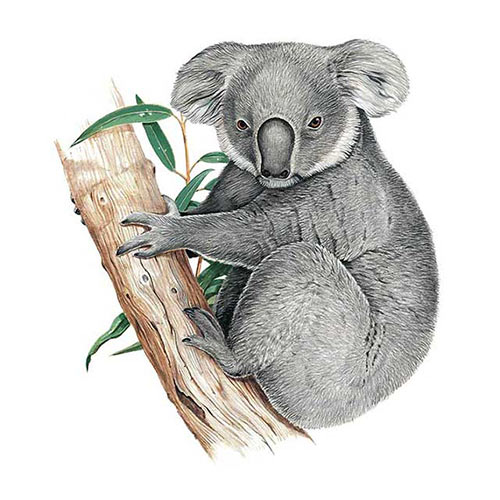 Animal Kingdom answer: KOALA