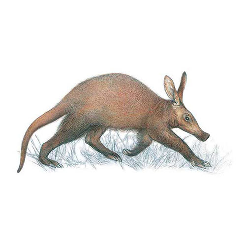 Animal Kingdom answer: AARDVARK