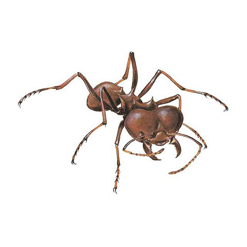 Animal Kingdom answer: LEAFCUTTER ANT