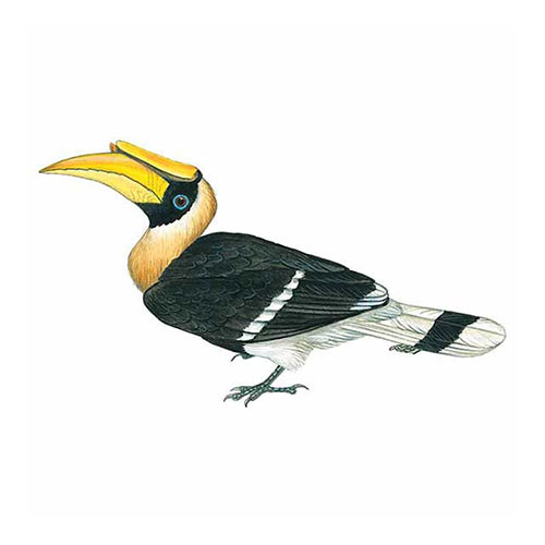 Animal Kingdom answer: HORNBILL