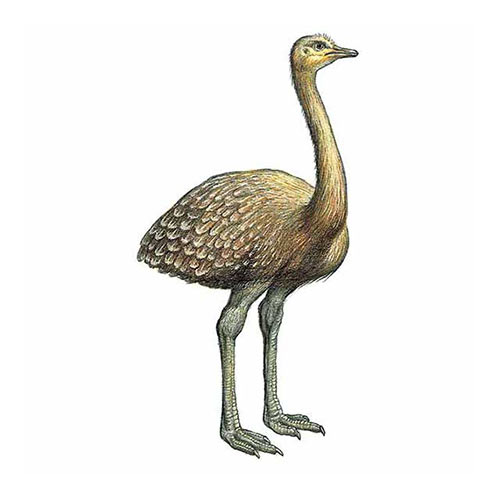Animal Kingdom answer: DARWINS RHEA