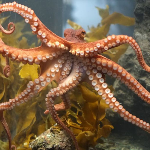 Animals answer: OCTOPUS