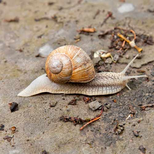 Animals answer: SNAIL