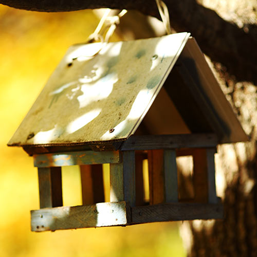 Around the House answer: BIRDHOUSE