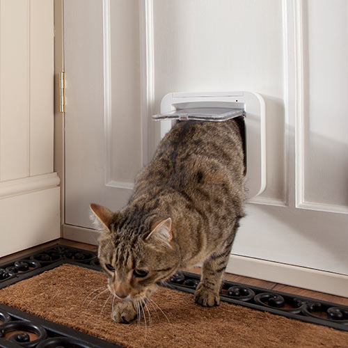 Around the House answer: CATFLAP