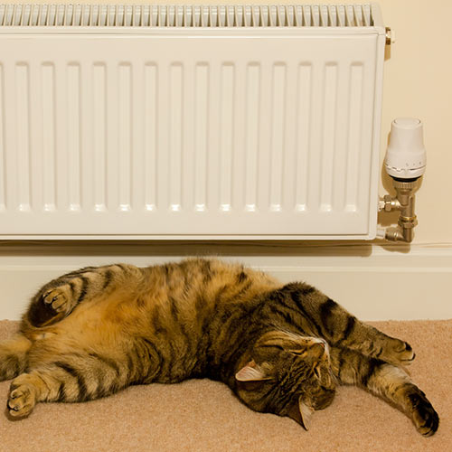 Around the House answer: RADIATOR