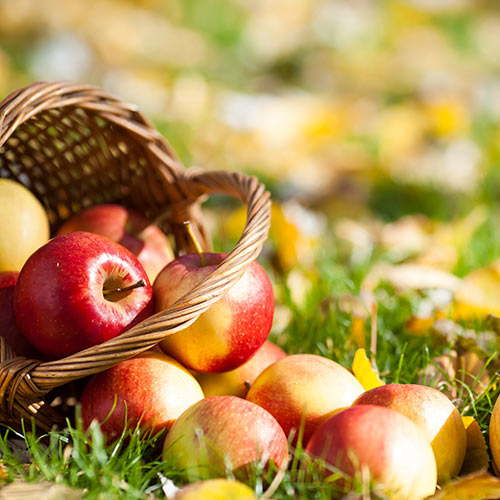 Autumn answer: APPLES