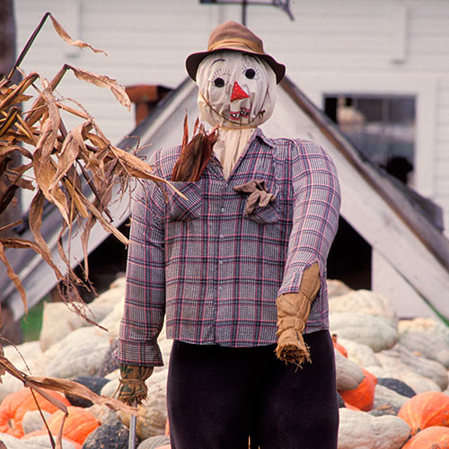 Autumn answer: SCARECROW