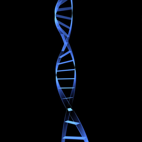 Body Parts answer: DNA