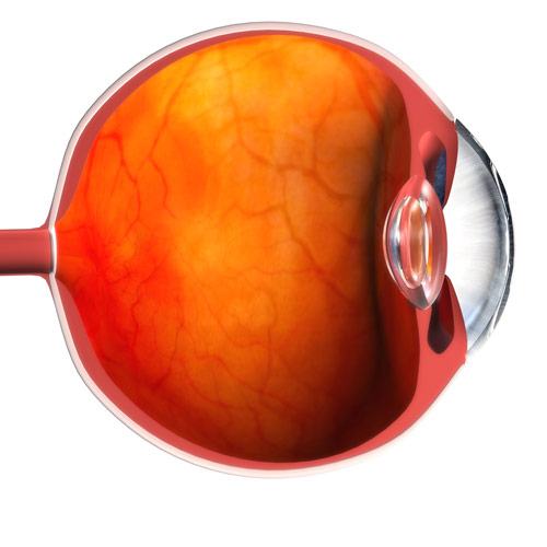 Body Parts answer: EYE BALL