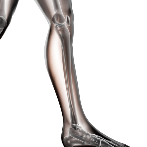 Body Parts answer: FIBULA