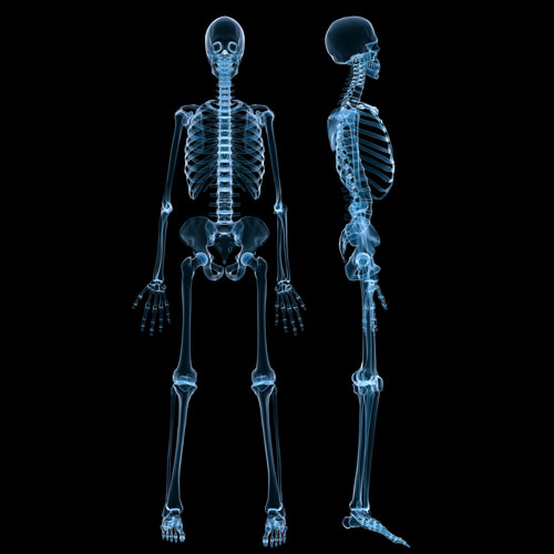 Body Parts answer: SKELETON