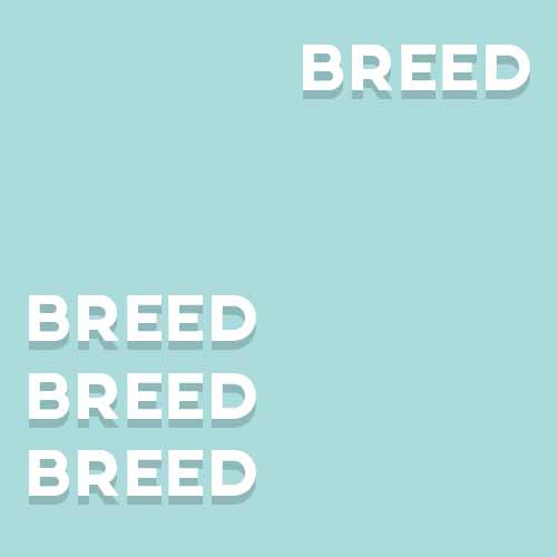 Catchphrases 3 answer: A BREED APART