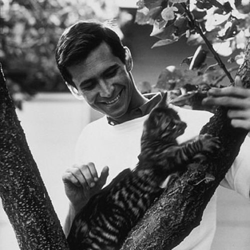 Cat Lovers answer: ANTHONY PERKINS