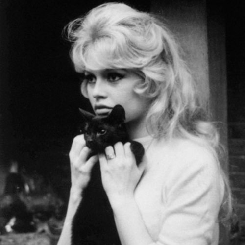 Cat Lovers answer: BRIGITTE BARDOT