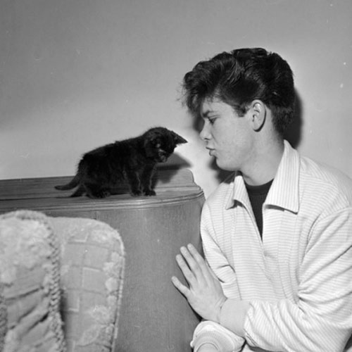 Cat Lovers answer: CLIFF RICHARD