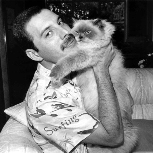 Cat Lovers answer: FREDDIE MERCURY