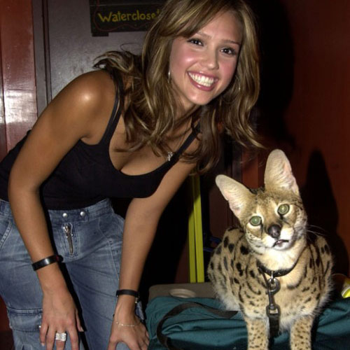 Cat Lovers answer: JESSICA ALBA
