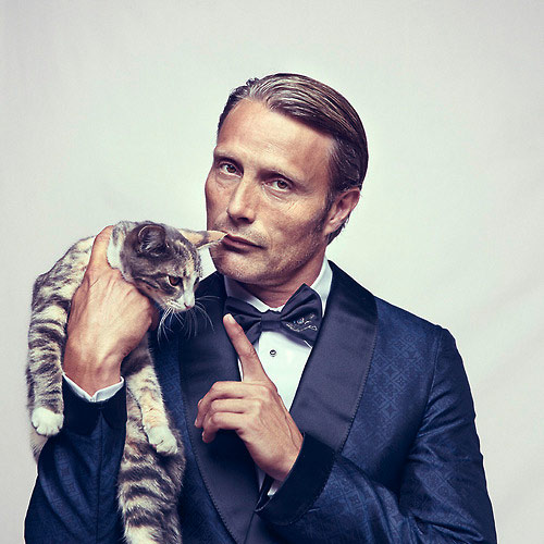 Cat Lovers answer: MADS MIKKELSEN