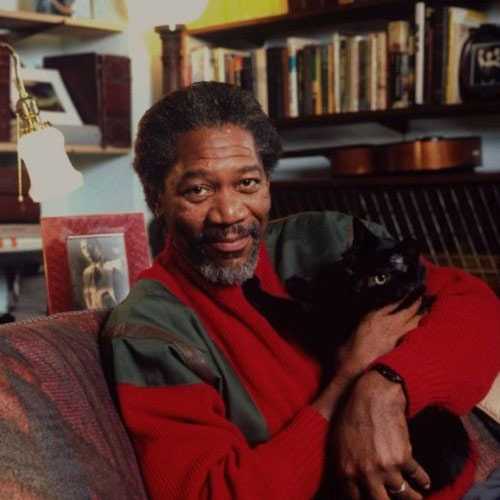 Cat Lovers answer: MORGAN FREEMAN