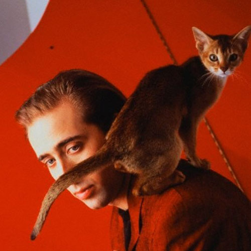 Cat Lovers answer: NICHOLAS CAGE
