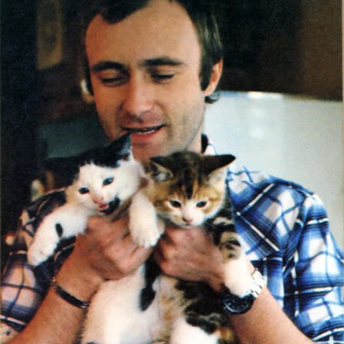 Cat Lovers answer: PHIL COLLINS