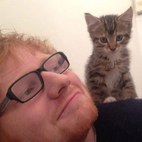 Cat Lovers answer: ED SHEERAN