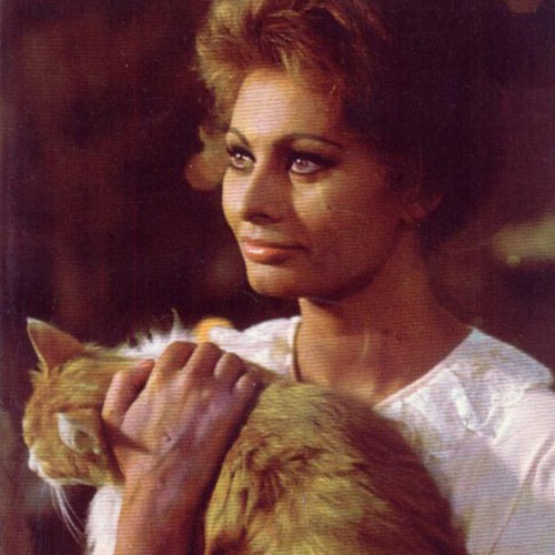 Cat Lovers answer: SOPHIA LOREN