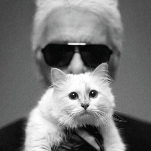 Cats answer: CHOUPETTE