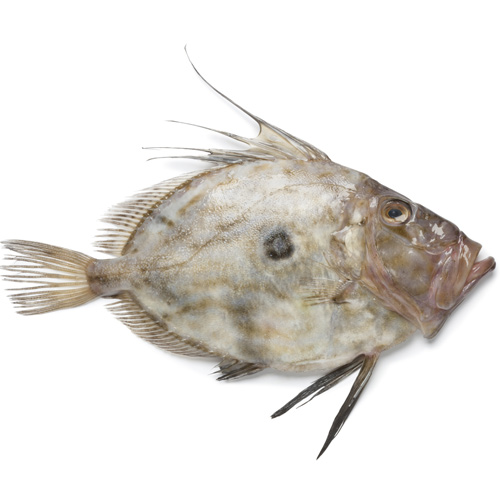 Cooking answer: JOHN DORY
