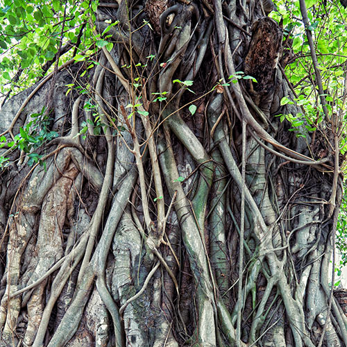 Desert Island answer: AERIAL ROOTS
