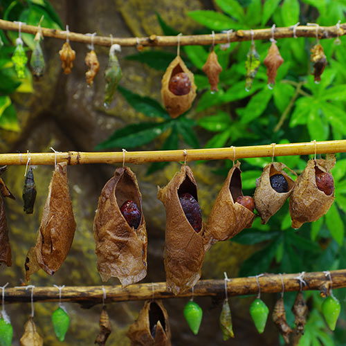 Desert Island answer: COCOONS