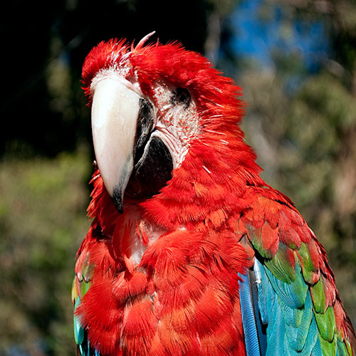 Desert Island answer: PARROT