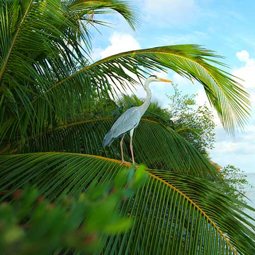 Desert Island answer: HERON