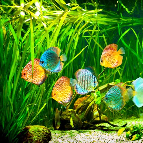 Dwellings answer: AQUARIUM