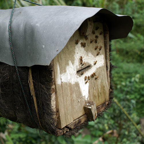 Dwellings answer: BEEHIVE