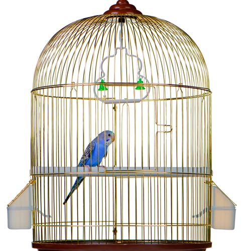 Dwellings answer: BIRDCAGE