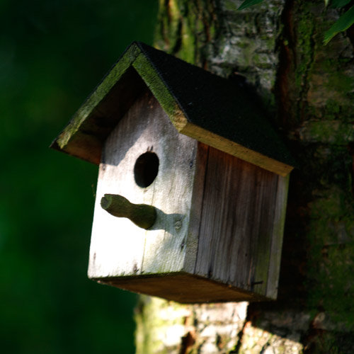 Dwellings answer: BIRDHOUSE