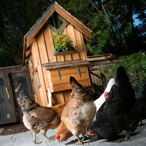 Dwellings answer: CHICKEN COOP