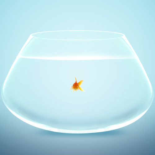Dwellings answer: GOLDFISH BOWL