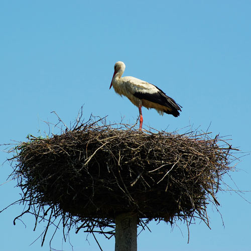 Dwellings answer: NEST